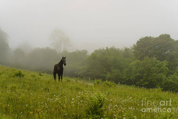 Photograph - Pasture Field Horse And Fog by Thomas R Fletcher