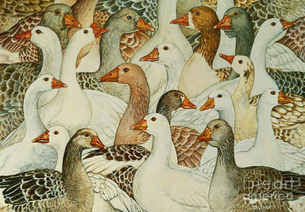 Fowl Painting - Patchwork Geese by Ditz