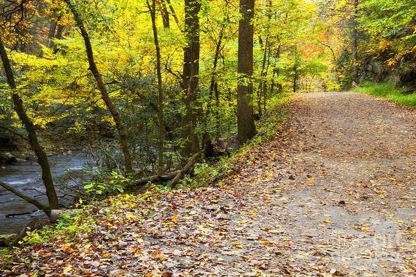 Photograph - Path Beside The Creek by Jill Lang