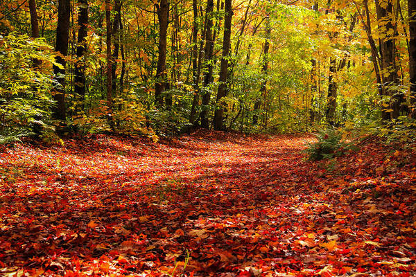 Photograph - Path Diverged In A Wood by Rachel Cohen