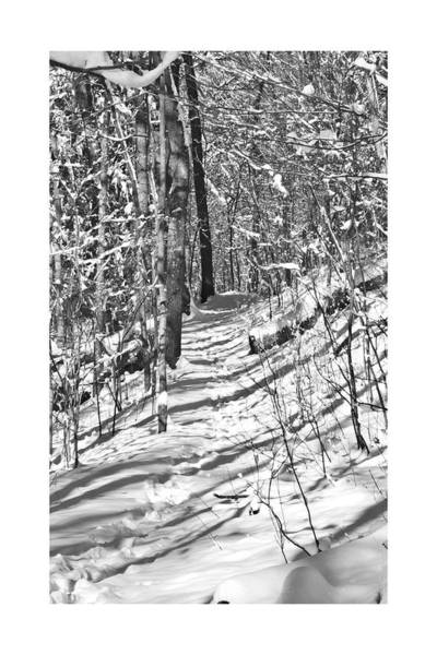Photograph - Path In Forest  Win 29 by G L Sarti