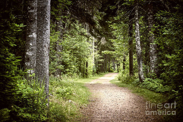 Path Photograph - Path In Green Forest by Elena Elisseeva