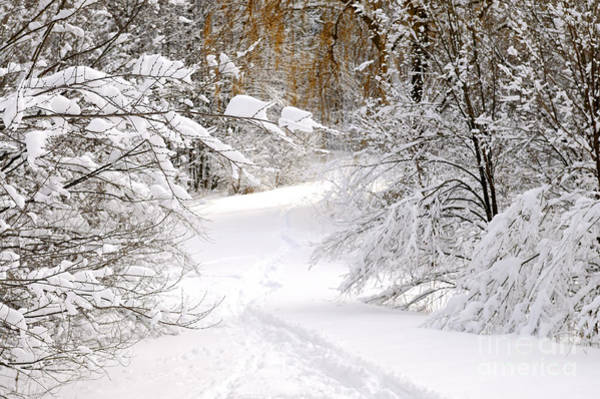 Wall Art - Photograph - Path In Winter Forest by Elena Elisseeva