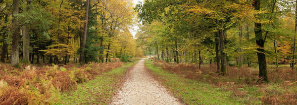 Wall Art - Photograph - Path Leading Through Forest by Travelpix Ltd