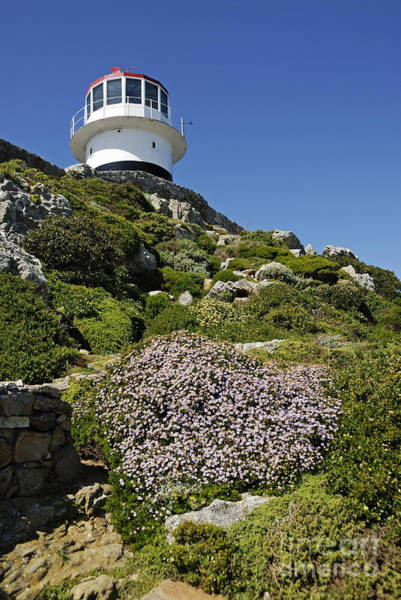 Wall Art - Photograph - Path Leading To Lighthouse At Cape Point by Sami Sarkis
