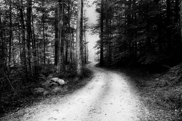 Photograph - Path Of Life In Black And White by Trina  Ansel