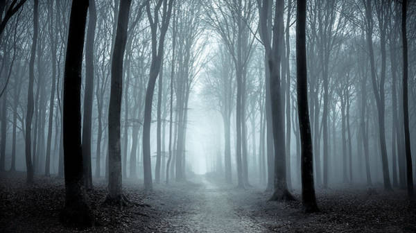 Path Through A Misty Forest During A Foggy Winter Day Art Print by Sjo