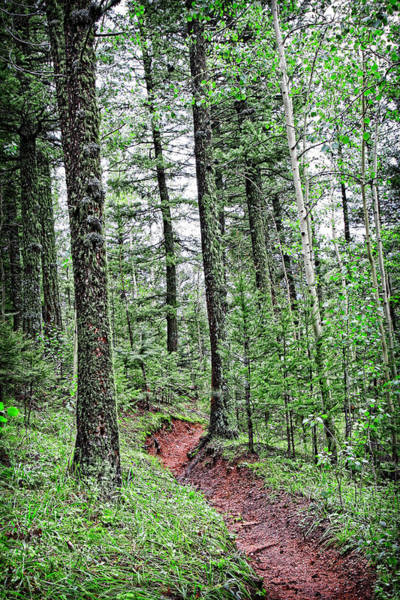 Photograph - Path Through A Peaceful Mountain Forest by Lincoln Rogers