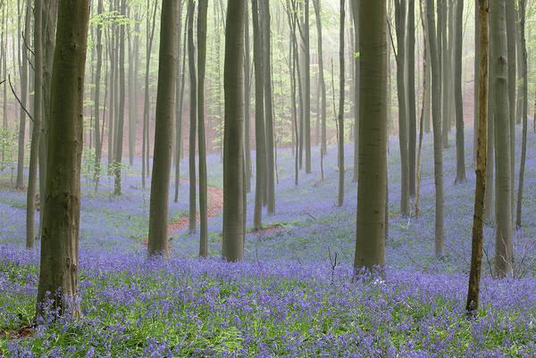Belgium Photograph - Path Through Forest, Belgium by Werner Van Steen