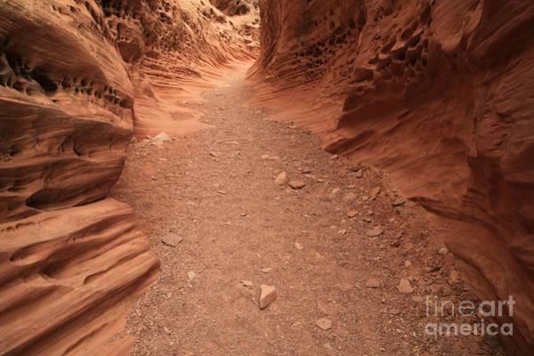 Photograph - Path Through Little Wildhorse by Adam Jewell
