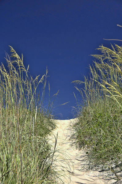Encounter Bay Photograph - Path Through The Dunes by Allen Beatty