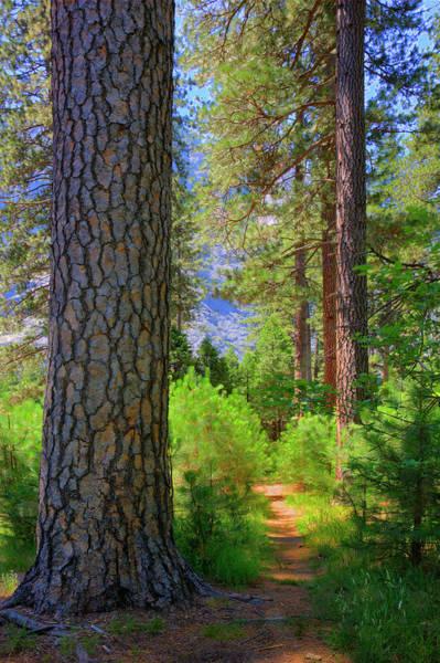 Wall Art - Photograph - Path Through Woods, Yosemite National by Ed Freeman