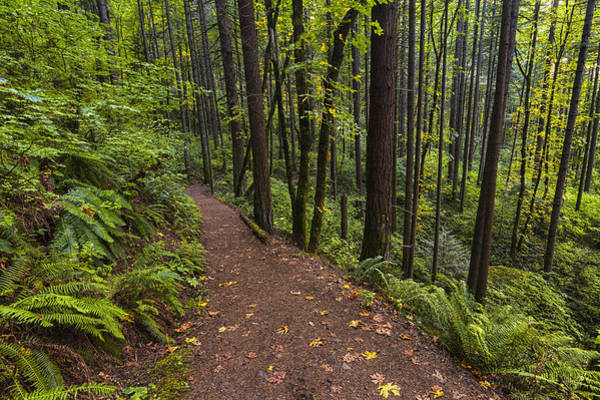 Photograph - Path To Elowah by Mark Kiver