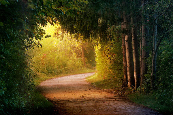 Morning Walk Wall Art - Photograph - Path To Enlightenment by Rob Blair