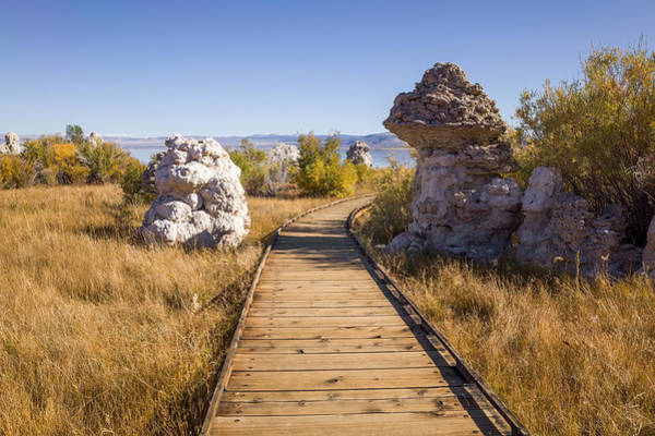 Photograph - Path To Mono Lake by Priya Ghose