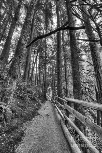 Wall Art - Photograph - Path To Sol Duc Falls by Twenty Two North Photography