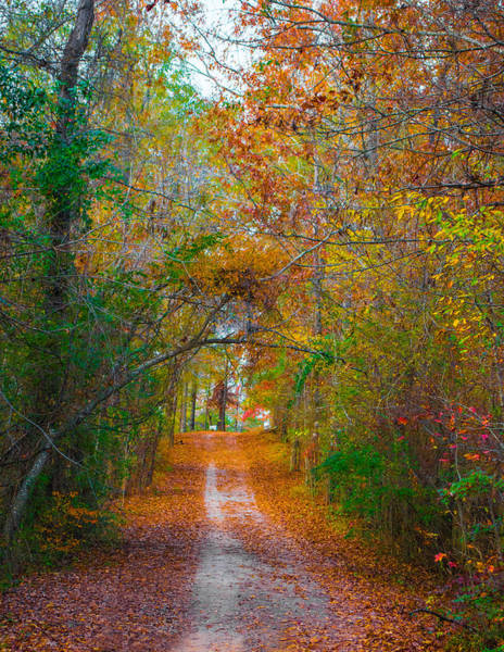 Photograph - Path To The Fairies by Parker Cunningham
