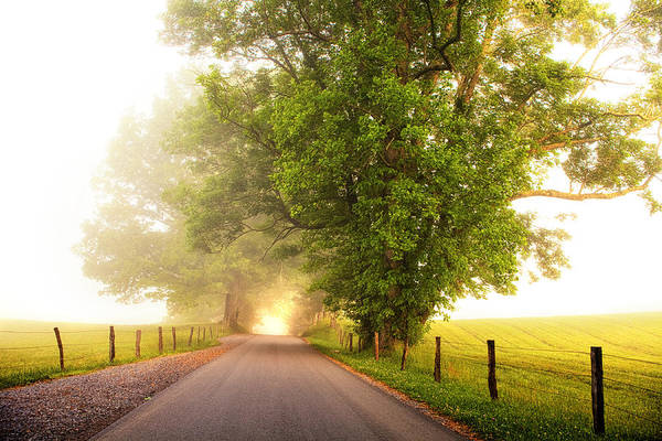 Cades Cove Photograph - Path To  The Fog by Andrew Soundarajan