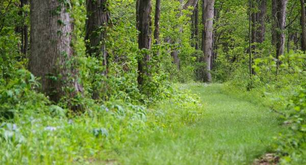 Wall Art - Photograph - Path To The Green Forest by Dan Sproul