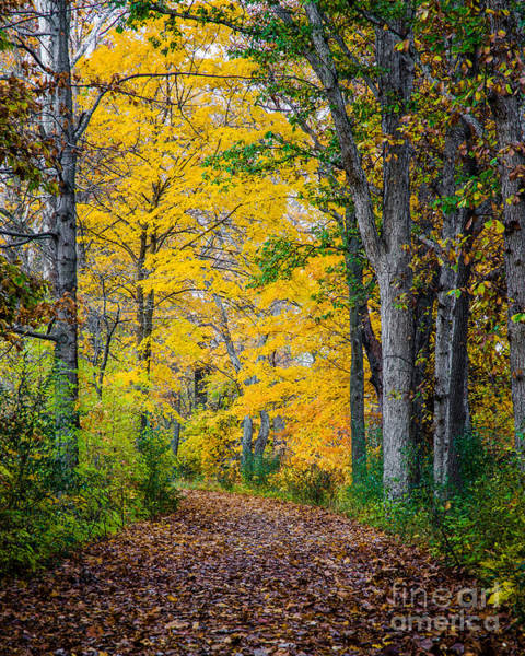 Photograph - Paths Along The Maumee River 5 by Michael Arend