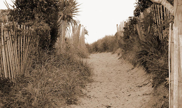Photograph - Pathway To The Beach by Cynthia Guinn