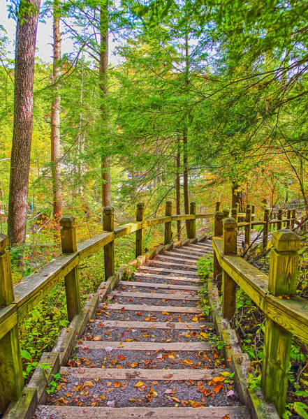 Swallow Falls State Park Wall Art - Photograph - Pathway To The Falls  by SCB Captures