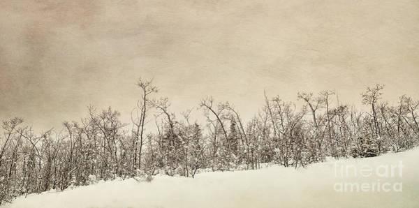 Treeline Photograph - Patience by Priska Wettstein