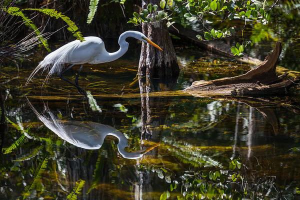 Florida Flora Photograph - Patient Hunter by W Chris Fooshee