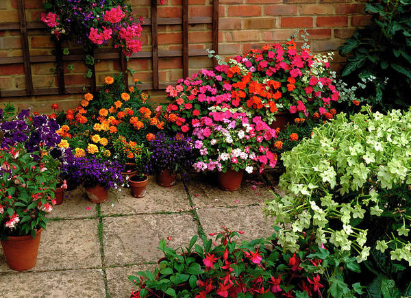 48 Wall Art - Photograph - Patio by Anthony Cooper/science Photo Library