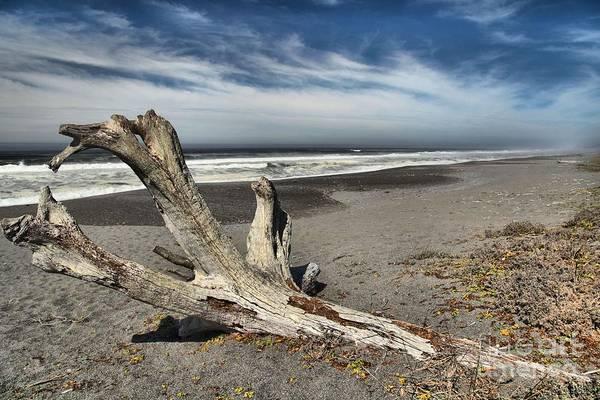 Photograph - Patrick's Drift Log by Adam Jewell