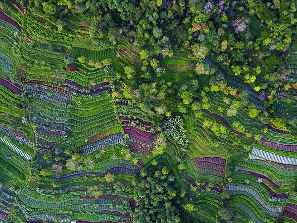 Terraces Wall Art - Photograph - Pattern by Farid Yuwono