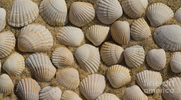 Photograph - Pattern Made Out Of Shells by Jaroslaw Blaminsky