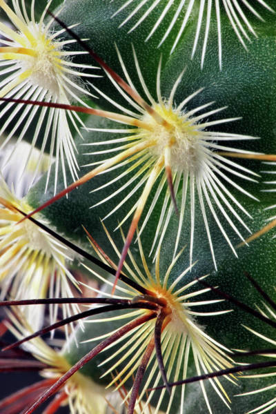 Wall Art - Photograph - Pattern Of Small Cactus Spines by Adam Jones