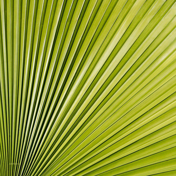 Photograph - Patterns In Nature by Julie Palencia