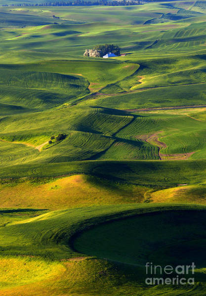 Palouse Photograph - Patterns Of The Palouse by Mike Dawson
