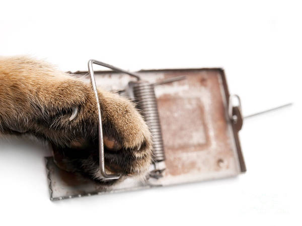 Paradox Photograph - Paw In Mousetrap by Sinisa Botas