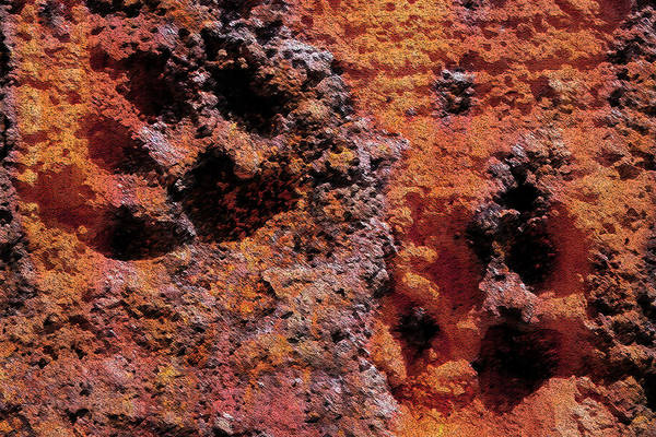 Photograph - Paw Prints Rust Over Time by Dorothy Berry-Lound