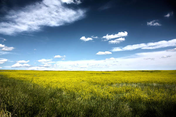 Photograph - Pawnee Grasslands by Shane Bechler