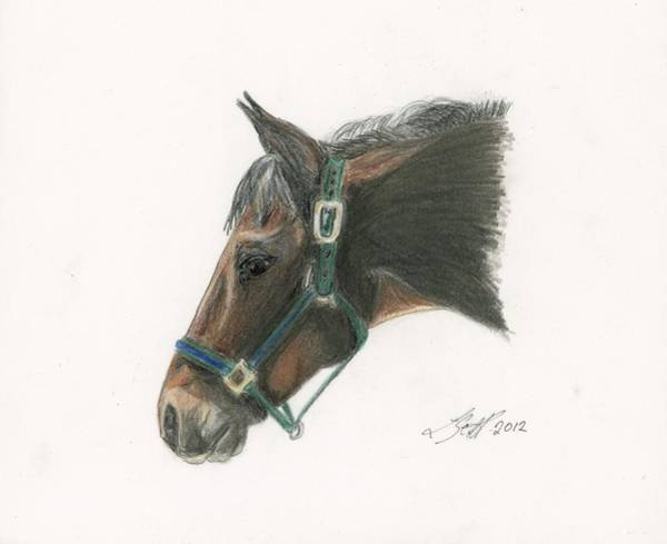Appaloosa Drawing - Pay Back by Laurie Scott