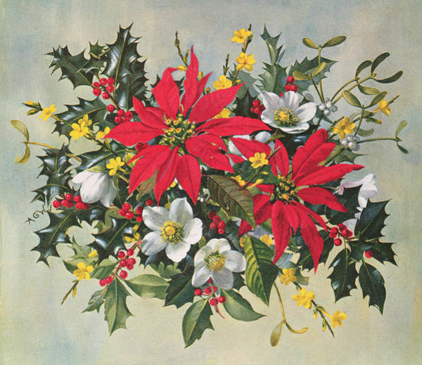 Christmas Flowers Painting - Christmas Flowers by Albert Williams