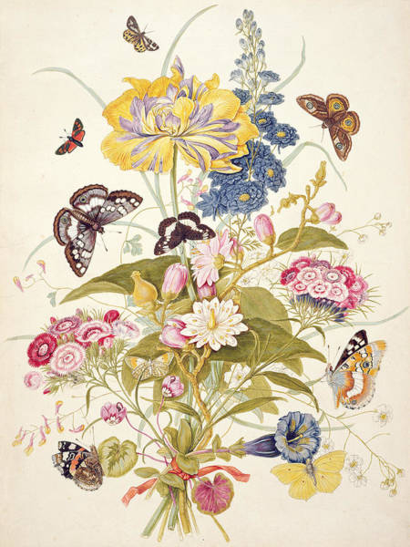 Butterfly Drawing - Pd.912-1973 Still Life Of Flowers by Thomas Robins