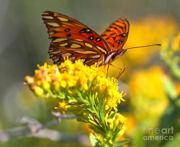 Wall Art - Photograph - Pea Island Butterfly by Adam Jewell