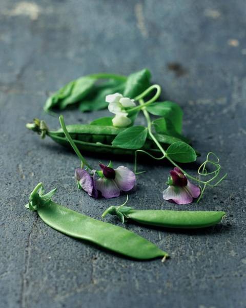 Green Vegetable Photograph - Pea Pods And Flowers by Romulo Yanes