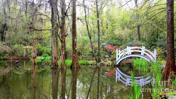 Photograph - Peaceful Cypress Pond by Carol Groenen