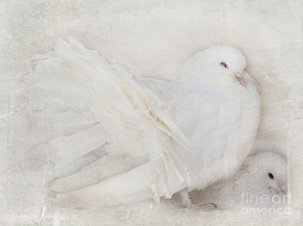 Wall Art - Photograph - Peaceful Existence White On White by Barbara McMahon