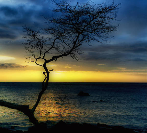 Photograph - Peaceful Hawaii by Kim Hojnacki