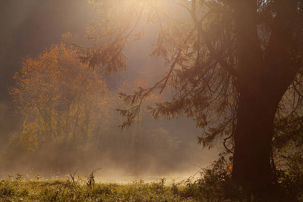 Foilage Photograph - Peaceful Moments by Karol Livote