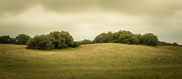 Coast Live Oak Photograph - Peaceful Pastures by Alexander Kunz