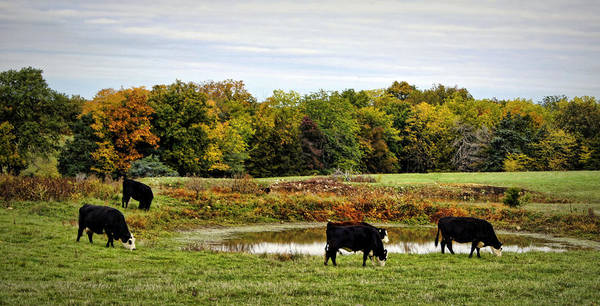 Photograph - Peaceful Pastures by Cricket Hackmann