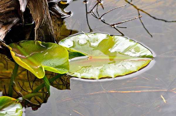 Photograph - Peaceful Reflections  by Roxy Hurtubise